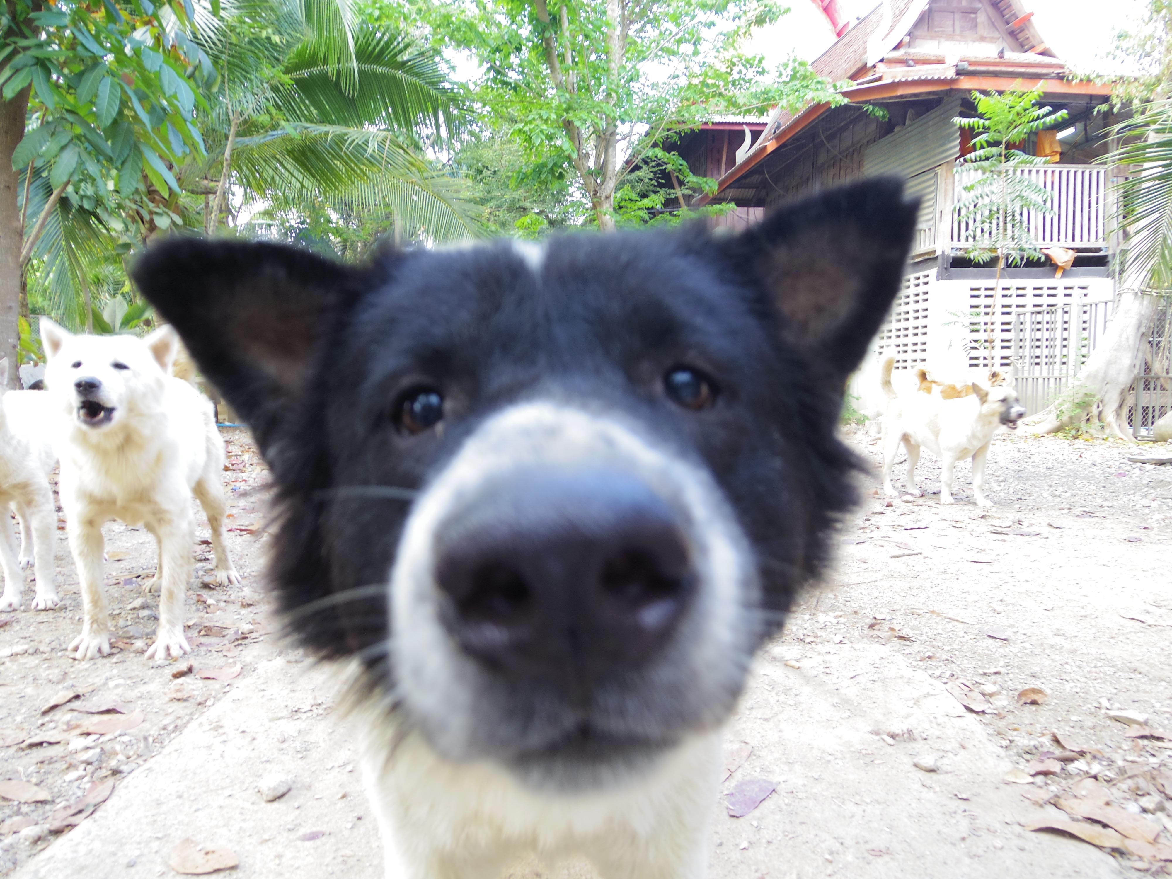 タイ〜カンボジア 国境越えを陸路でしてみた。