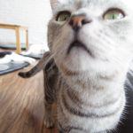 """タイ・チェンライの猫カフェ""""CAT 'n' A CUP""""のニャンコたち。"""