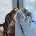 チェンライの猫カフェに行ってきました。獣医師から見てどーなの?という話。