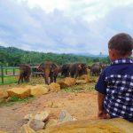 ピンナワラの象の孤児院に行ってみて感じたこと。