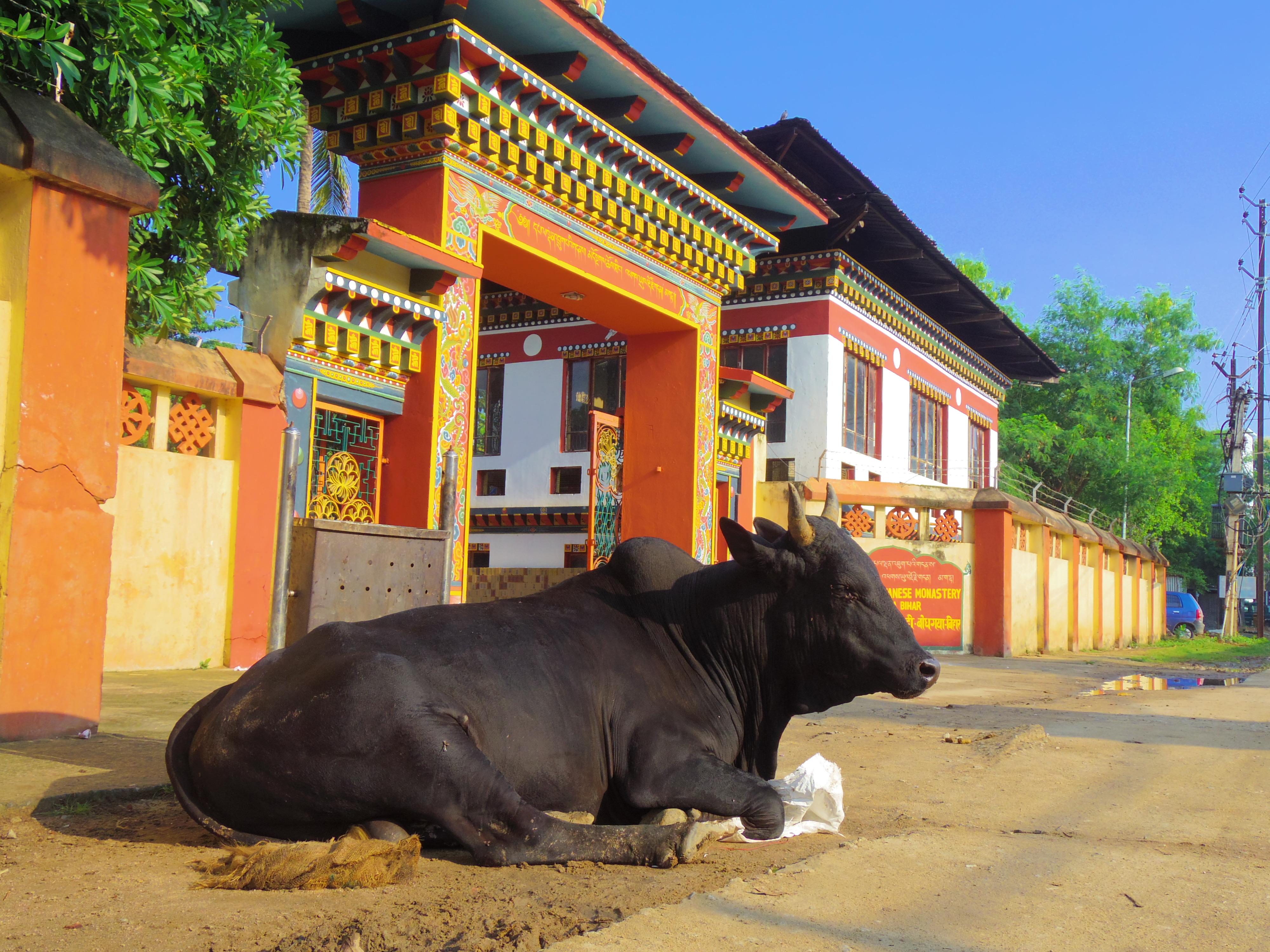 ブッダガヤの日本寺で座禅を教えてもらった。