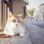 アテネ猫歩き。