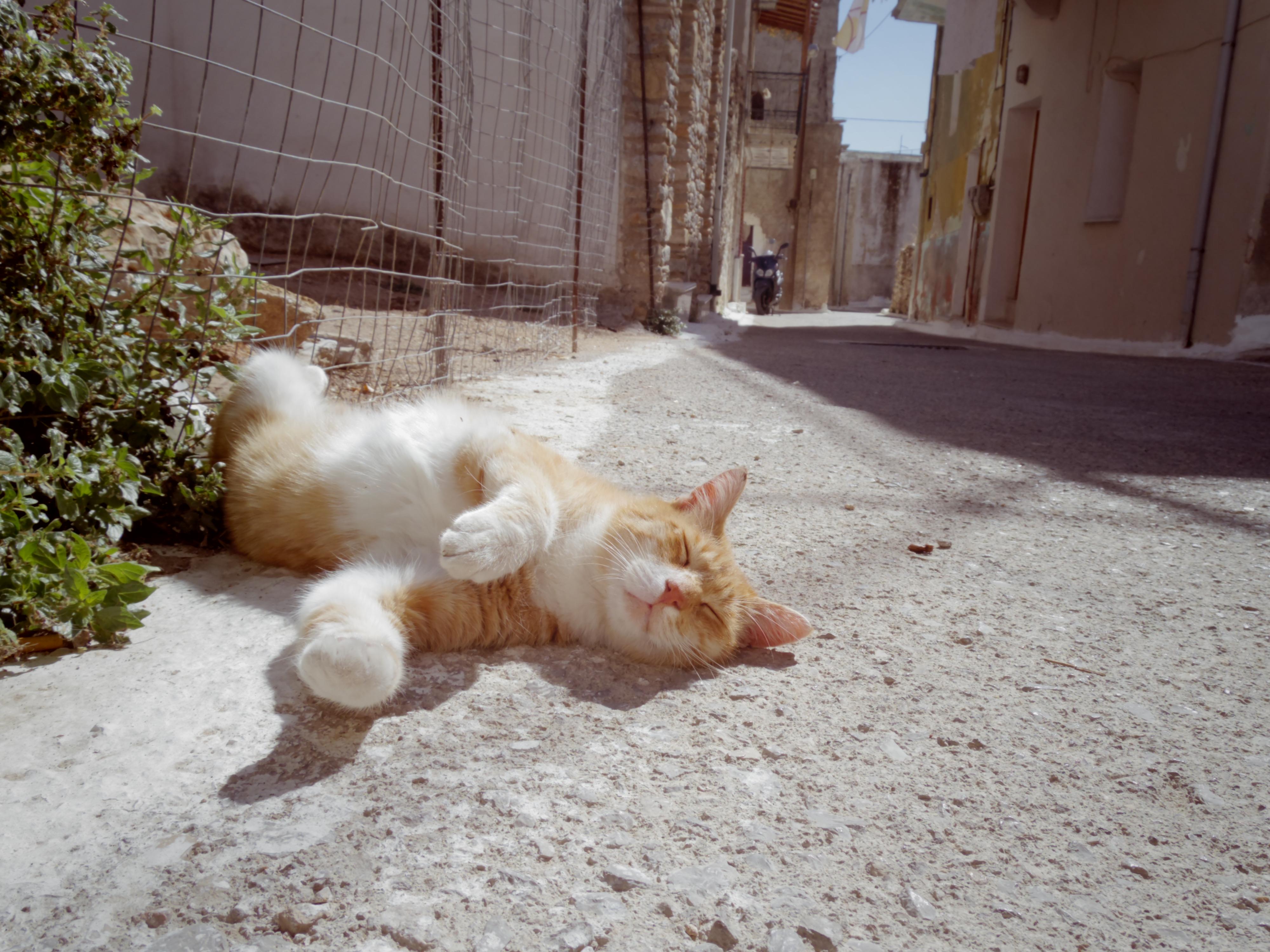 【世界と日本の動物】ギリシャ・アテネの犬猫事情。
