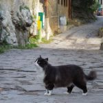 ヴァルナからバスでヴェリコ・タルノヴォへ。猫歩きに最適な街。