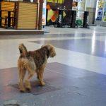 【ルーマニア・ブカレストの治安】野良犬の咬傷被害が多いと言われる街の現実は??