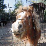 ブルガリアのヴァルナで動物園に行ってみた。そして、あの人との再開。