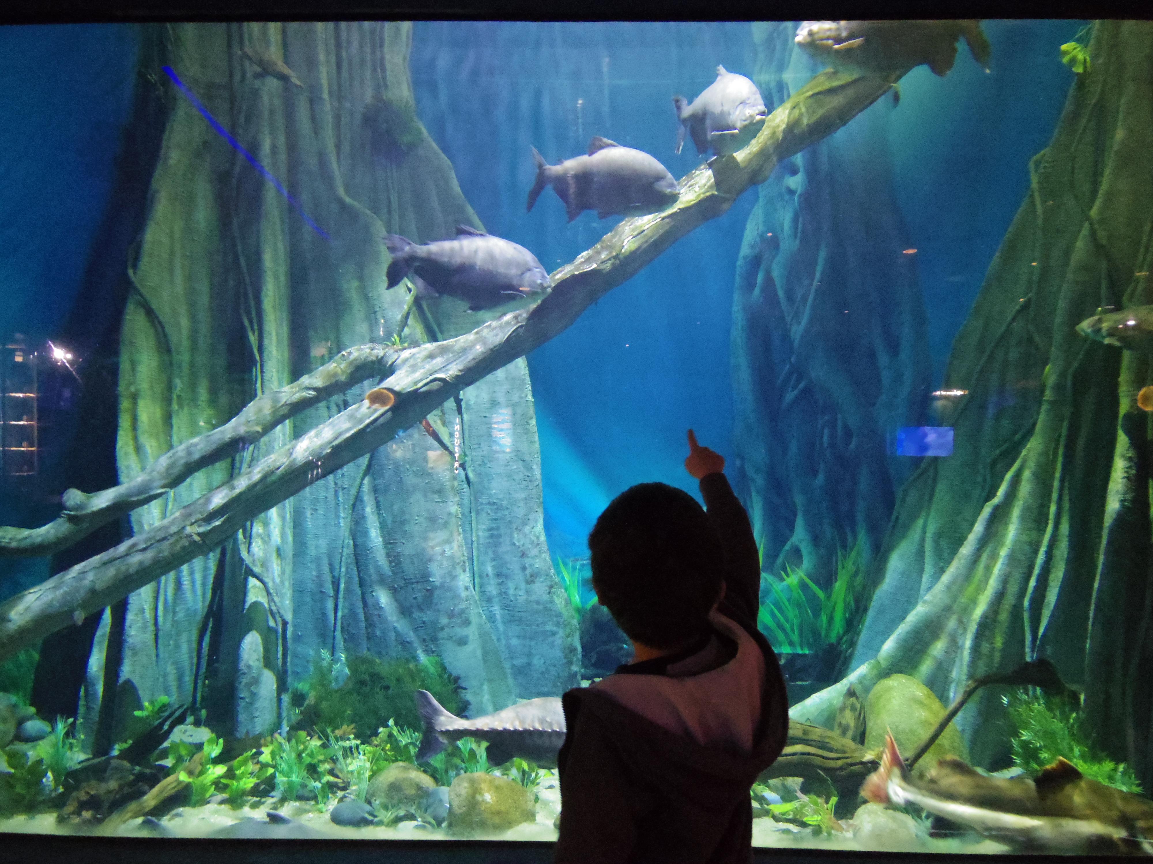イギリスの水族館ってどんなだろう??モビーディックの謎を知る。