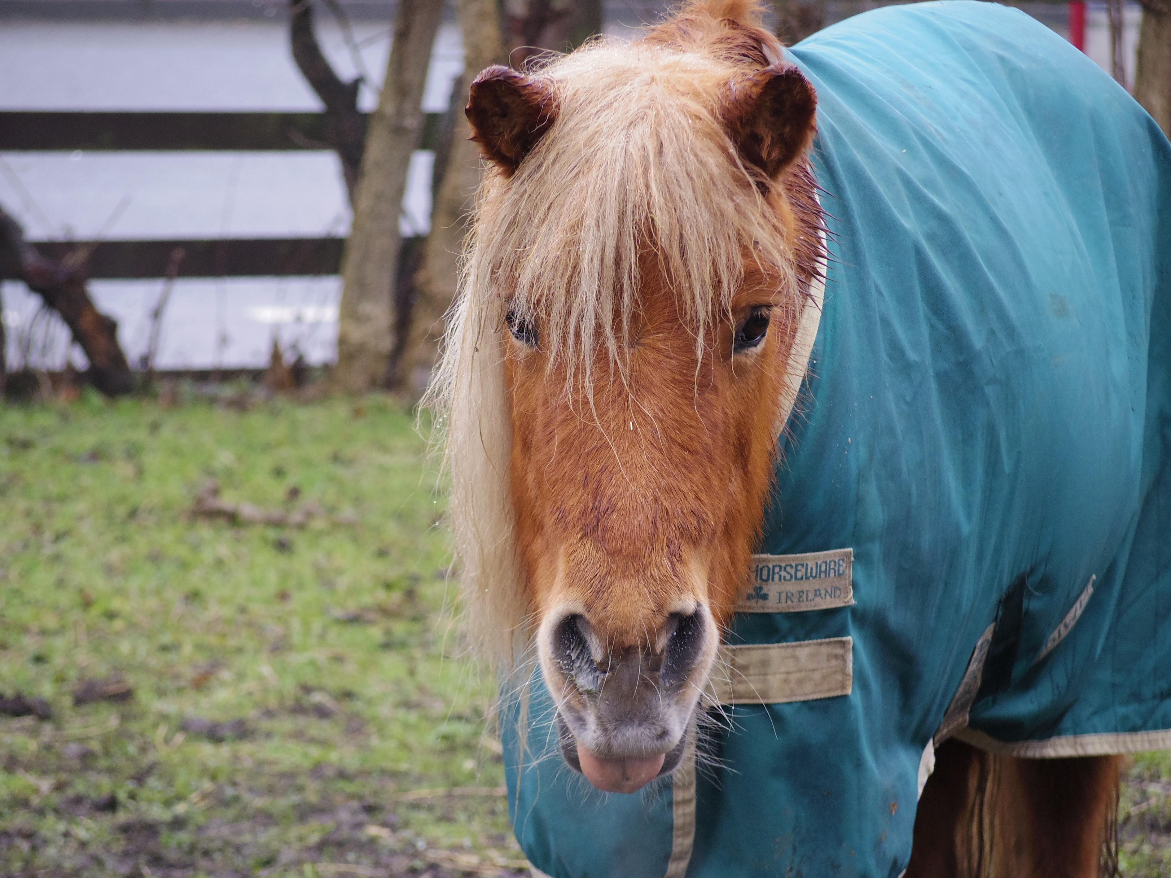 【イギリスの動物】リーズにある馬とポニーの保護施設に行って来た。