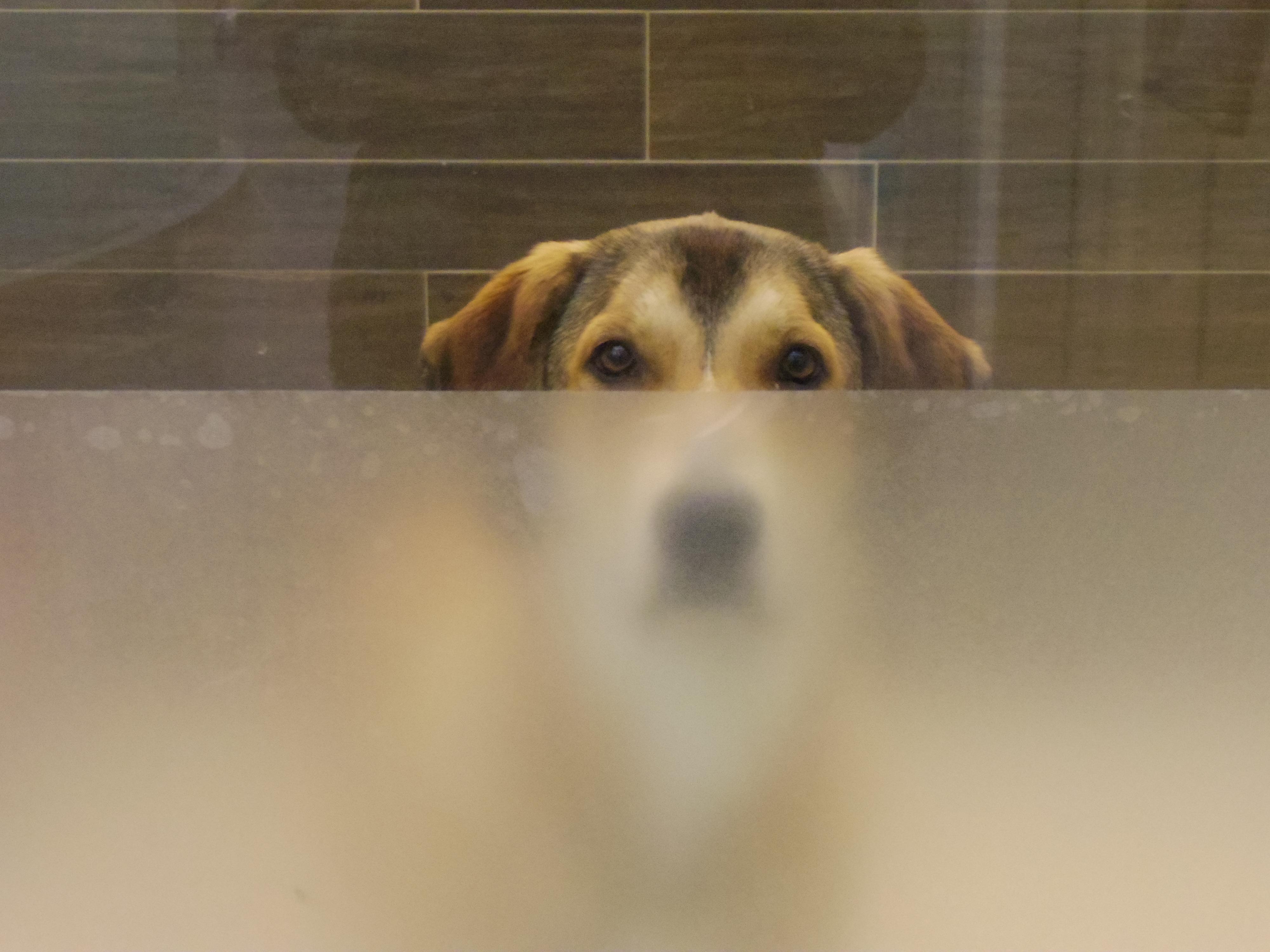 【アメリカの動物保護施設】サンフランシスコのSPCAを見学。犬編。