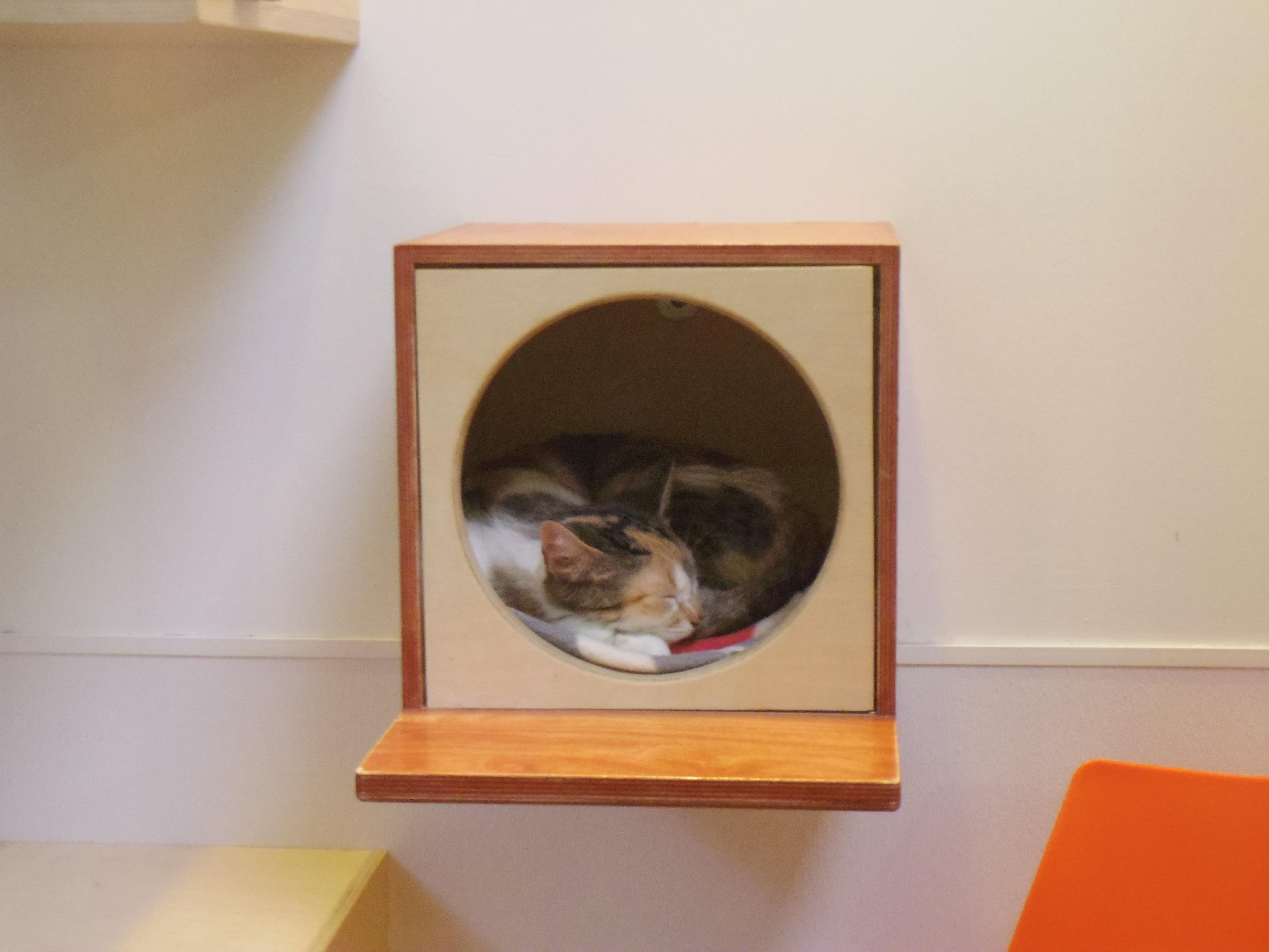 【アメリカの動物保護施設】サンフランシスコSPCAのHeightsシェルターを見学。