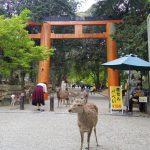 【日本プチ縦断 in 奈良】奈良の東大寺の大仏と春日大社。やっぱり鹿まみれ。