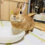 【日本プチ縦断 in 中国】広島で日本酒&鶏祭。鶏の研究者って意外と少ないんです。