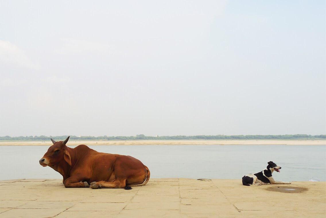 【世界一周動物写真展】東京&鹿児島での開催日程