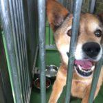 【動物福祉】動物愛護センターってどんなところ?内部を大公開!