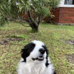 【犬のしつけの効果的な方法とは?】獣医師とドッグトレーナーの違い。